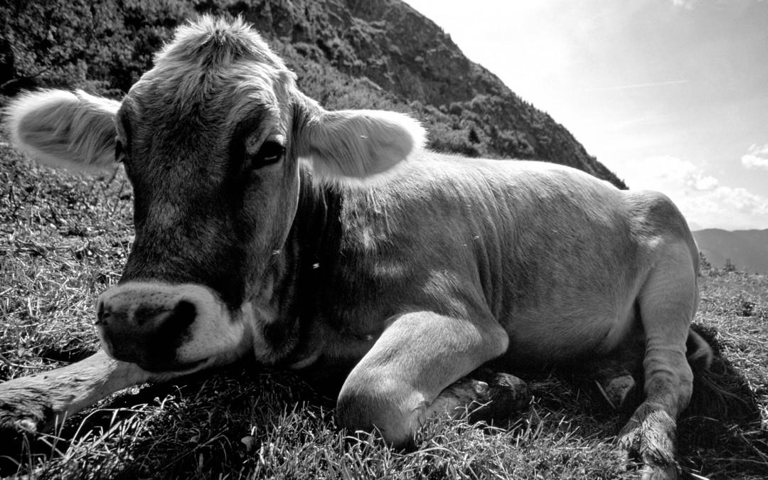 O scurta istorie a (in)tolerantei la lactoza