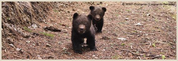 Cum se impusca in Romania 1691 de animale din specii protejate