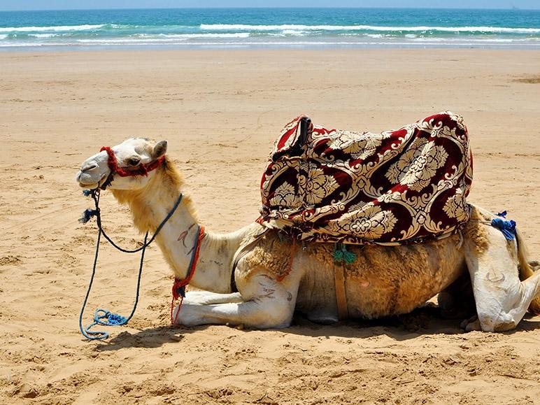 O noua destinatie in cinci: Maroc